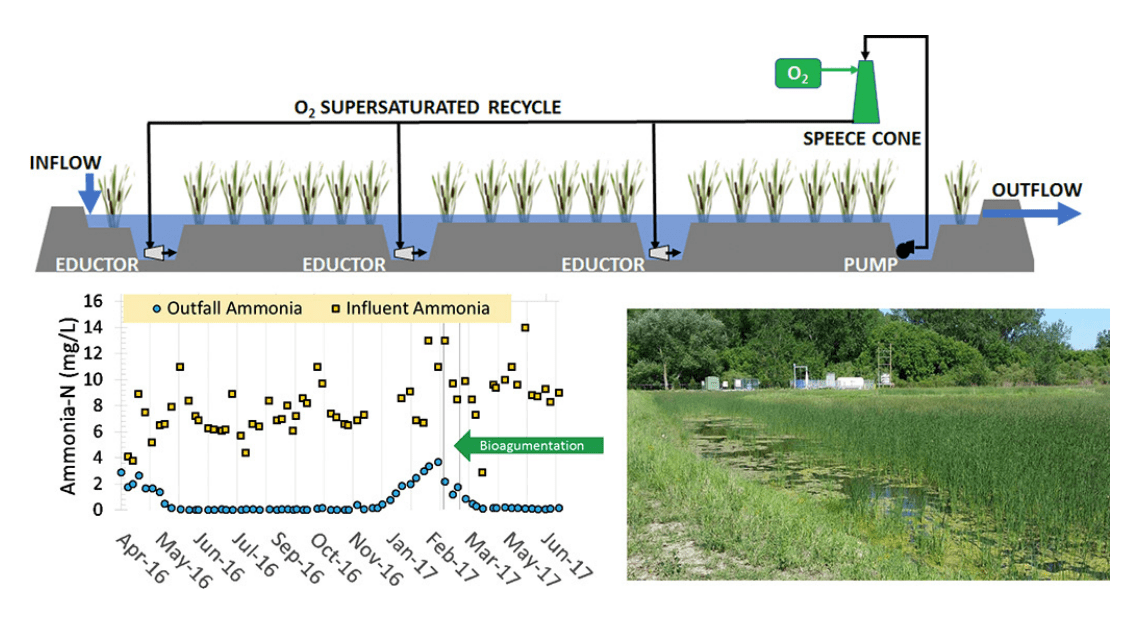 Nitrification and total nitrogen removal in a super-oxygenated wetland